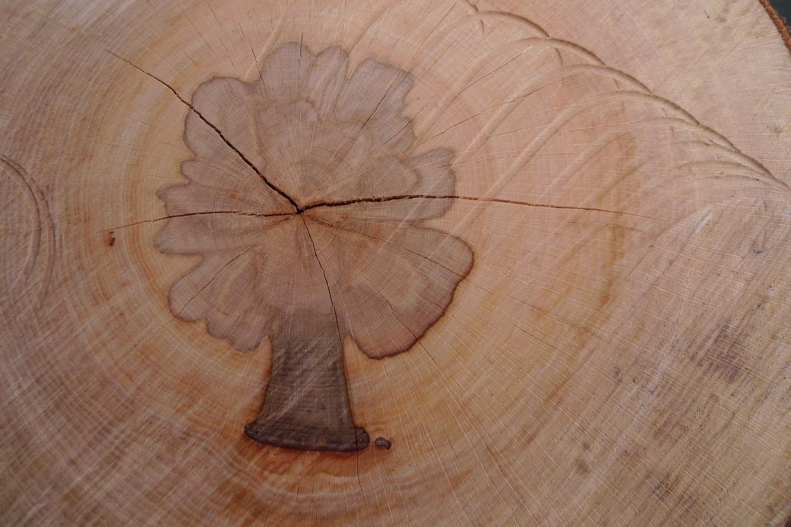 Fotoclub Olpe | Baum im Baum